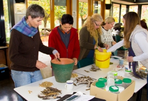 members sorting seeds image