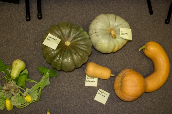 Photo pumpkin varieties