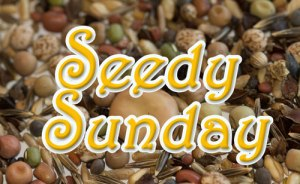 Seedy Sunday 14 June