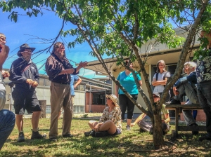 Photo from workshop fruit tree pruning