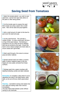 Method for cleaning tomato seeds (click to view as PDF)