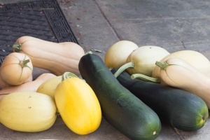 Image of zucchini and pumpkins.
