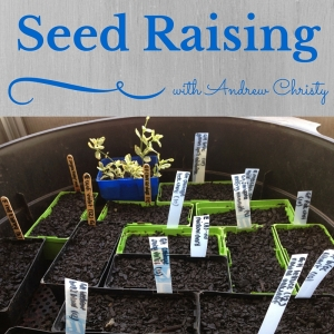 Image of seed raising punnets