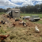 Chooks and their mobile van